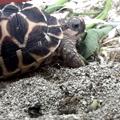 Animal on Batu Secret Zoo
